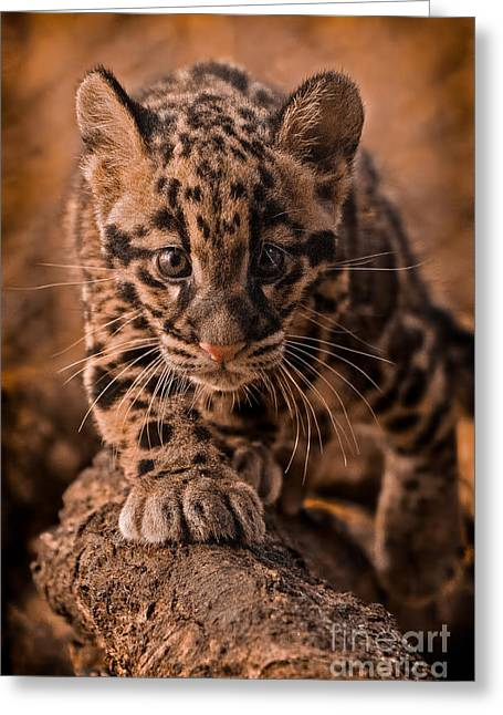 Golden Leopard Greeting Cards - Cautious Advance Greeting Card by Ashley Vincent