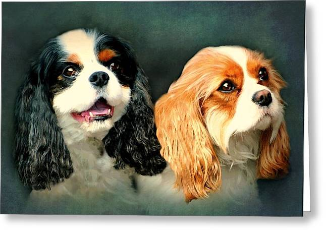 Spaniel Greeting Cards - Cavalier King Charles Greeting Card by Diana Angstadt