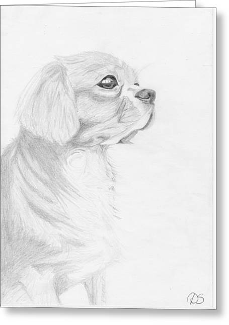 Spaniel Greeting Cards - Cavalier King Charles Spaniel Greeting Card by David Smith