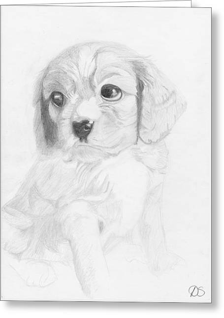 Spaniel Greeting Cards - Cavalier King Charles Spaniel Puppy Greeting Card by David Smith