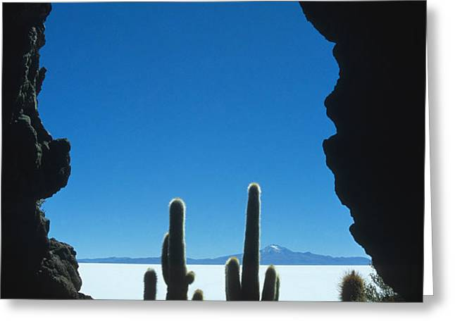 Cave and cacti Greeting Card by James Brunker