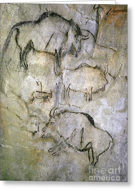 Upper Paleolithic Greeting Cards - Cave Painting Greeting Card by Tom McHugh