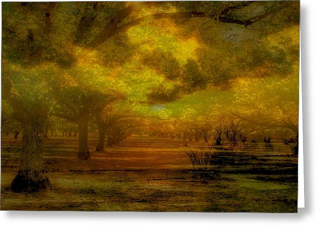 Walnut Tree Photograph Greeting Cards - Cavorting with Light and Shadow Greeting Card by Kandy Hurley
