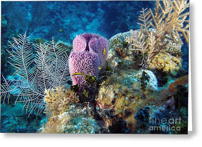 Cayman Reef Greeting Card by Carey Chen