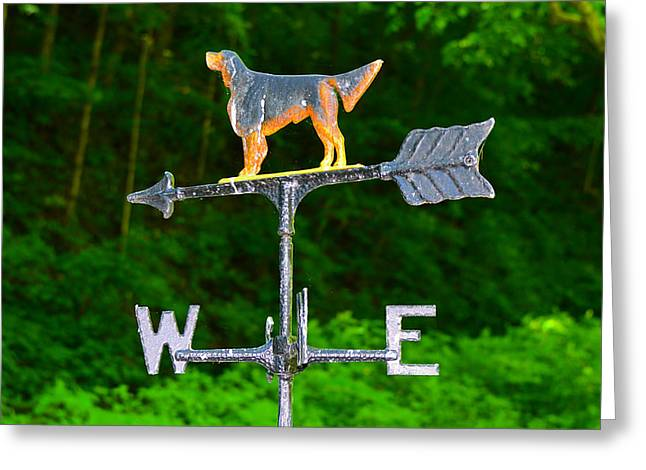 Wind Vane Greeting Cards - Pointer Greeting Card by David Lee Thompson