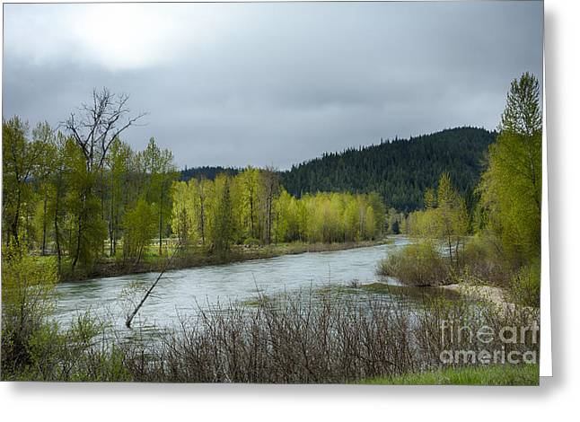 North Fork Greeting Cards - CDA North Fork Spring Greeting Card by Idaho Scenic Images Linda Lantzy