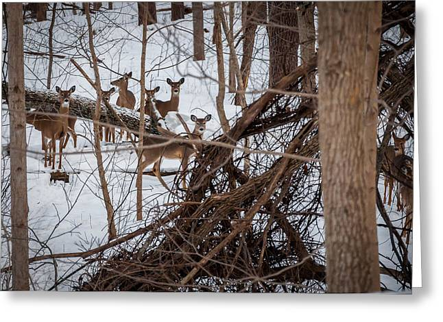 Indiana Scenes Greeting Cards - Cedar Canyons White-tailed Deer Greeting Card by Gene Sherrill