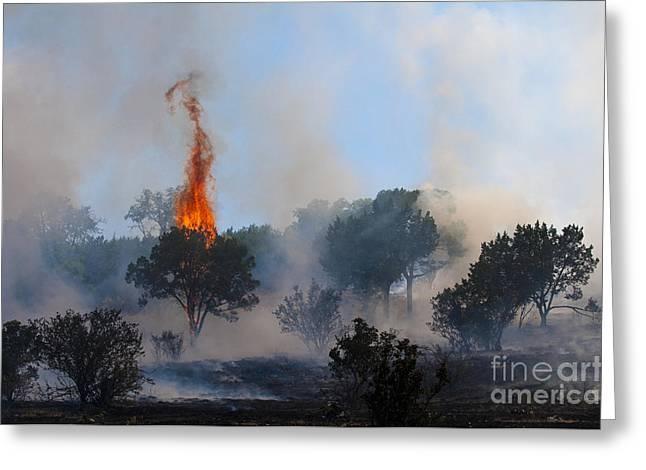 Wimberley Greeting Cards - Cedar Fire Greeting Card by Richard Mason