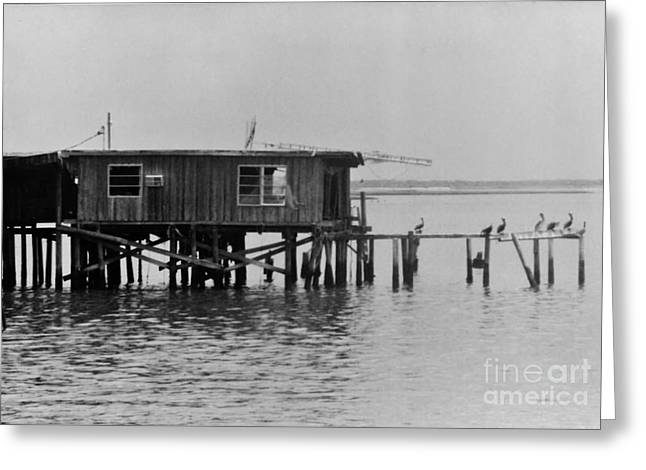 Cedar Key Photographs Greeting Cards - Cedar Key - Black and White Greeting Card by D Hackett