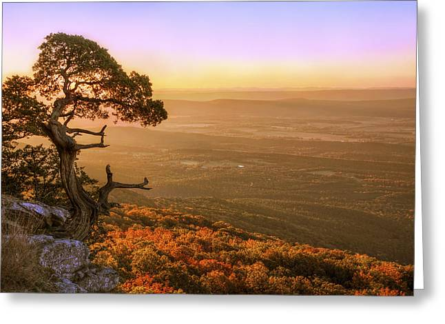Mt Magazine Greeting Cards - Cedar Tree atop Mt. Magazine - Arkansas - Autumn Greeting Card by Jason Politte