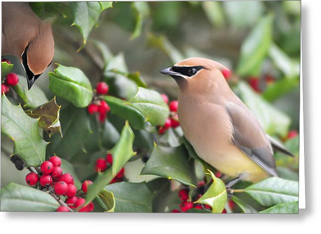 Cedar Waxwing Greeting Cards - Cedar Waxwing in Holly Tree Greeting Card by Terry DeLuco