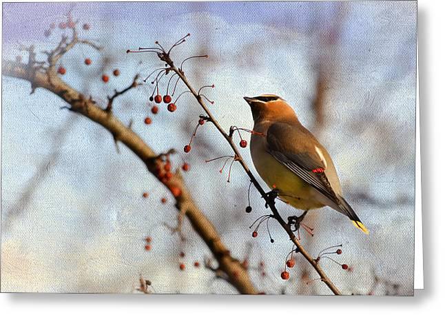 Bird In Tree Greeting Cards - Cedar Waxwing and Berries Greeting Card by Julie Palencia