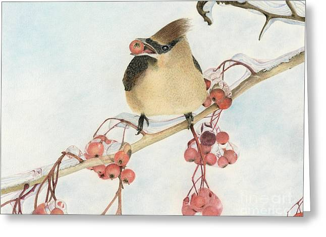 Bird On Tree Drawings Greeting Cards - Cedar Waxwing Greeting Card by Patty Poole