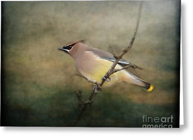 Cedar Waxwing Greeting Cards - Cedar Waxwing Portrait I Greeting Card by Jai Johnson