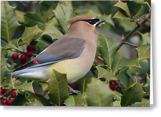 Cedar Waxwings Greeting Cards - Cedar Waxwing Side Profile Greeting Card by Terry DeLuco