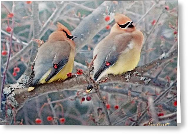 Wildlife Digital Art Greeting Cards - Cedar Waxwings Greeting Card by Ken Everett