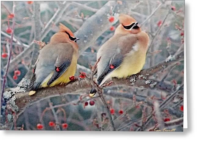 Cedar Waxwings Greeting Card by Ken Everett
