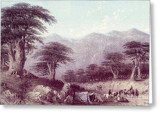 Historical Images Drawings Greeting Cards - Cedars of Lebanon Greeting Card by Blackthorn Visuals
