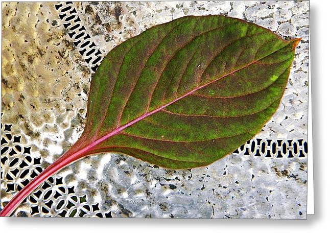 Avocado Leaves Greeting Cards - Celosia Foliage Greeting Card by Chris Berry