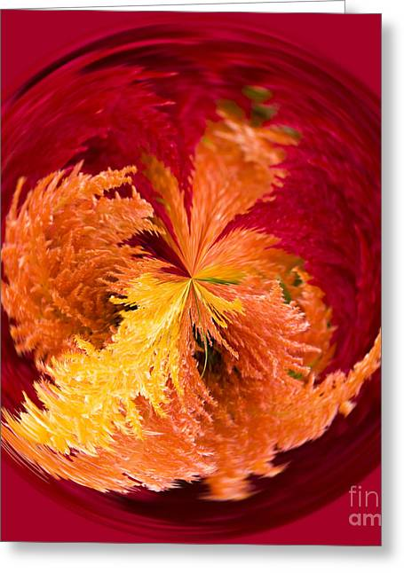 Process Greeting Cards - Celosia on Fire Greeting Card by Anne Gilbert