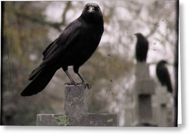 Passerine Greeting Cards - Cemetery Crows Greeting Card by Gothicolors Donna Snyder