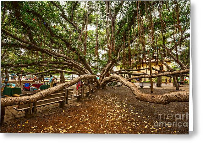 Lahaina Greeting Cards - Center Court - Banyan Tree Park in Maui. Greeting Card by Jamie Pham