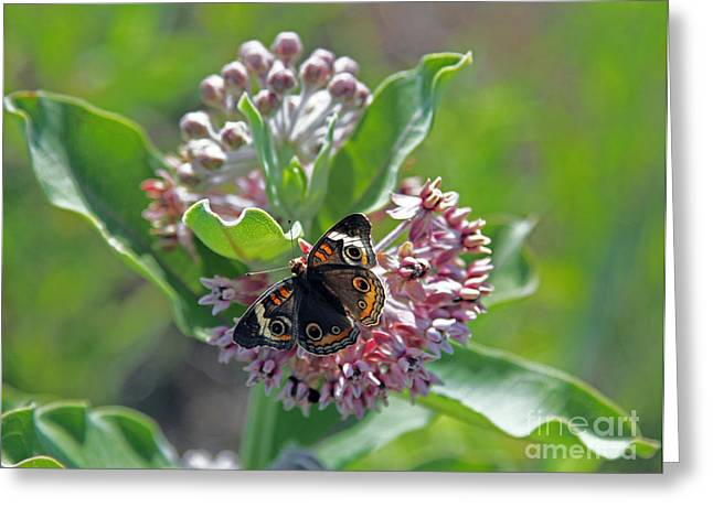The Nature Center Greeting Cards - Center of attention Greeting Card by Betty Morgan