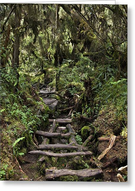 Central Circuit On Ruwenzori Greeting Card by Martin Zwick