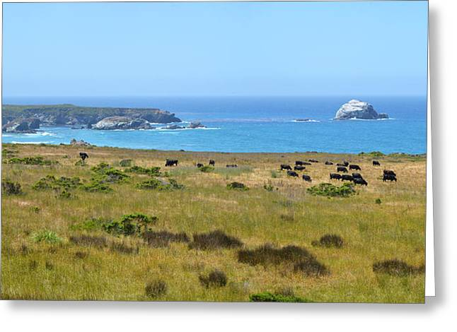 Coast Hwy Ca Greeting Cards - Central Coast Panorama - Hwy 1 Greeting Card by Lynn Bauer