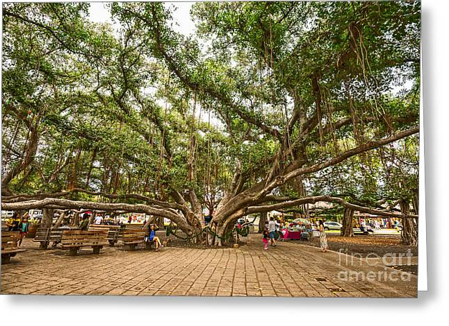 Central Court - Banyan Tree Park In Maui. Greeting Card by Jamie Pham