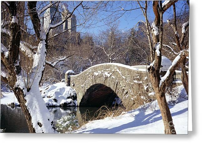 Snowstorm Greeting Cards - Central Park In Winter Greeting Card by Rafael Macia