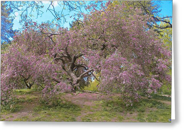 Stroll In The Park Greeting Cards - Central Park Pink Flowered Tree 2 Greeting Card by Muriel Levison Goodwin