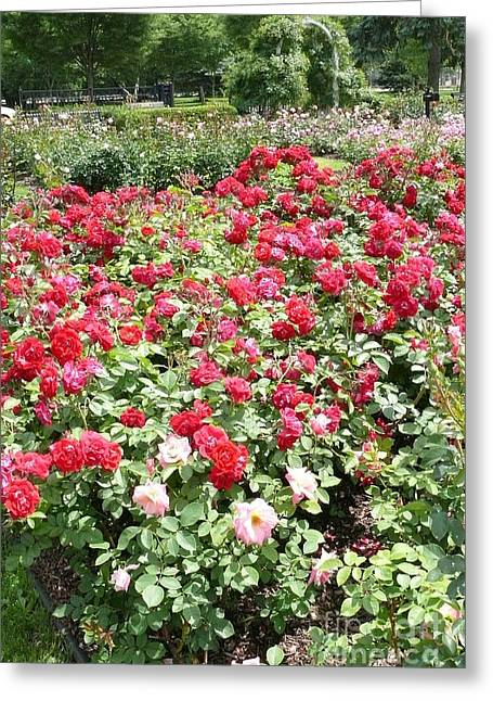 Rsoes Greeting Cards - Central Park Rose Garden 2 Greeting Card by Betsy Cotton