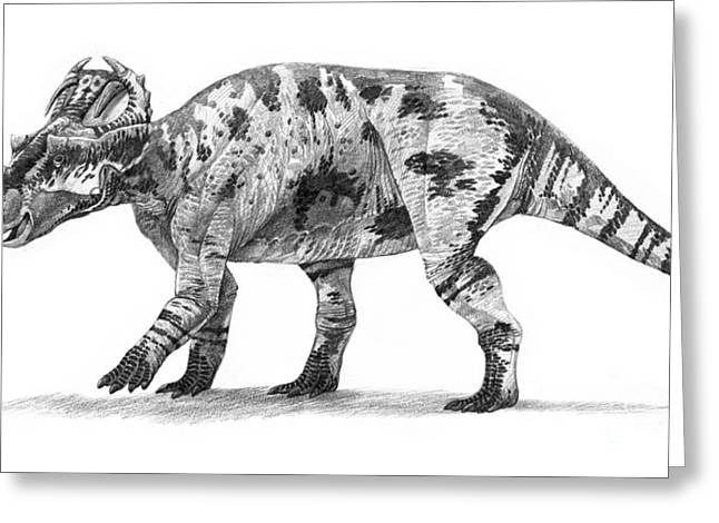 Triceratops Greeting Cards - Centrosaurus Apertus Dinosaur Greeting Card by Roman Garcia Mora