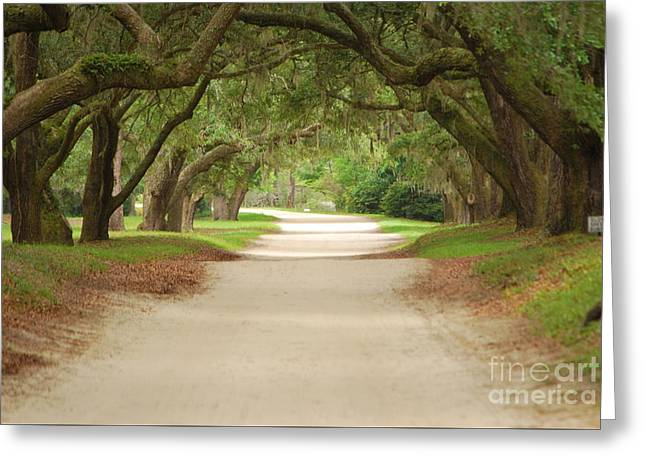 Old Roadway Greeting Cards - Century Old Oaks Greeting Card by Bob Sample