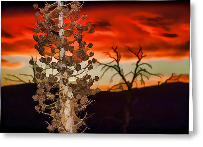 Rocks Greeting Cards - Century Soldier Sunset Greeting Card by Scott Campbell
