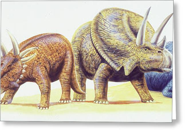 Ceratopsid Dinosaurs Greeting Card by Deagostini/uig