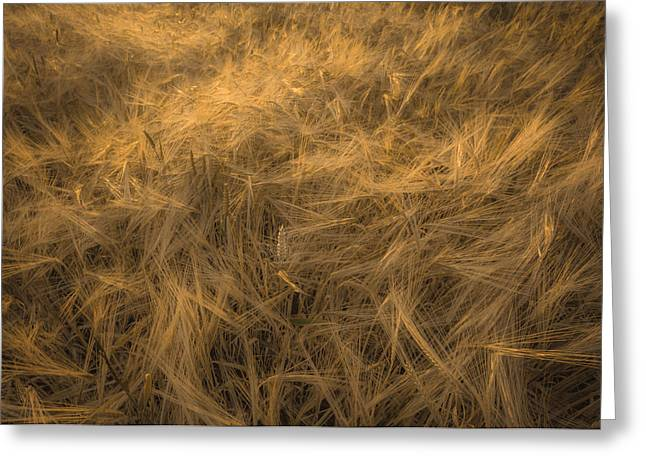 Summer Wheat Greeting Cards - Cereal Greeting Card by Chris Fletcher