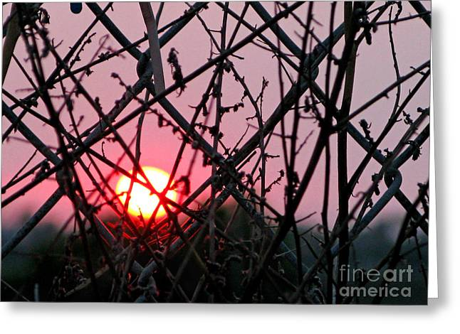 Fushia Greeting Cards - Chain Link Sunset Greeting Card by Jennie Breeze