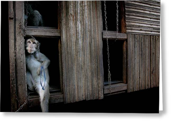 Performance Cruel Greeting Cards - Chained Monkeys Greeting Card by Ubud High