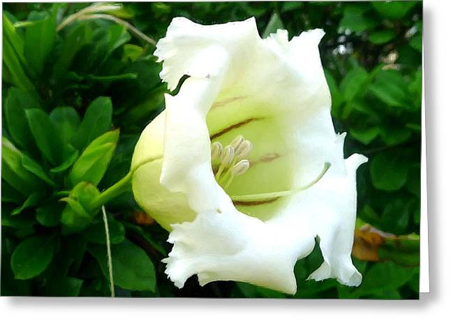 Tropical Greeting Cards - Chalice vine flower 6 Greeting Card by Lanjee Chee
