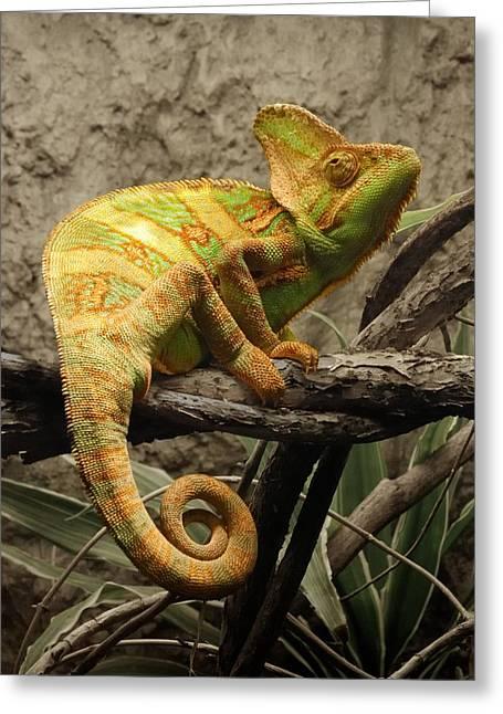 Jaguar Animal Greeting Cards - Chameleon Greeting Card by Jim Hughes
