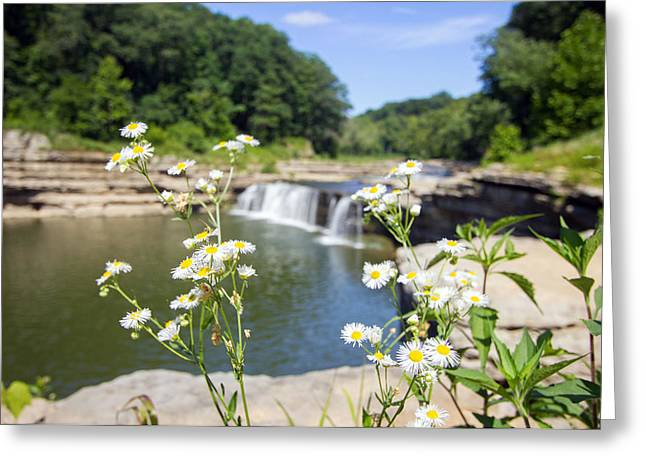 Indiana Flowers Greeting Cards - Chamomile at The Falls Greeting Card by Jackie Novak