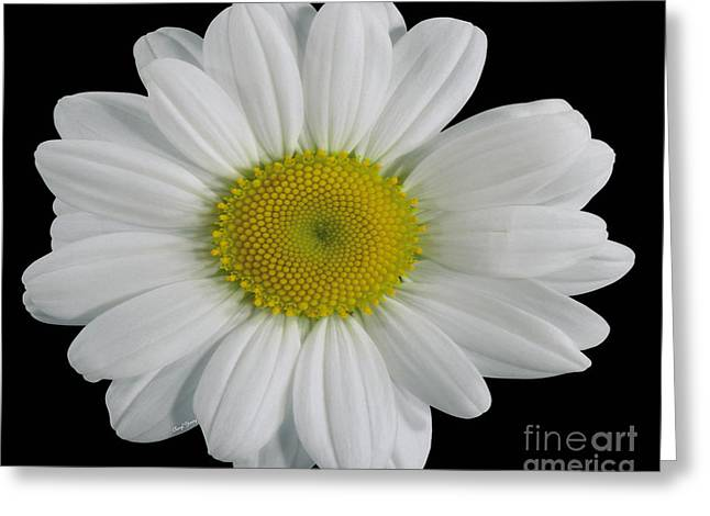 Flower Design Greeting Cards - Chamomile Flower Greeting Card by Cheryl Young