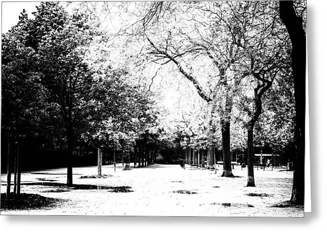 Champs Greeting Cards - Champ de Mars Trees in mono Greeting Card by Nomad Art And  Design