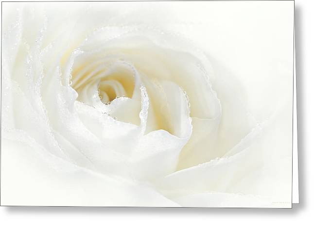 Champagne White Rose Flower  Greeting Card by Jennie Marie Schell