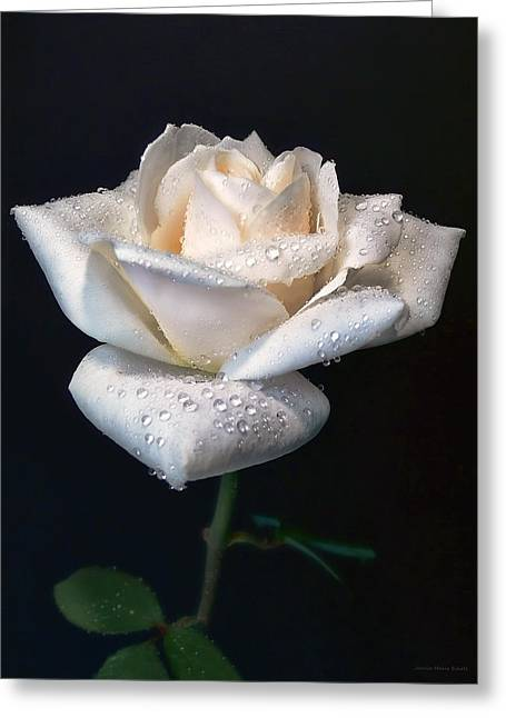 Ivory Roses Greeting Cards - Champagne Rose Flower Portrait Greeting Card by Jennie Marie Schell
