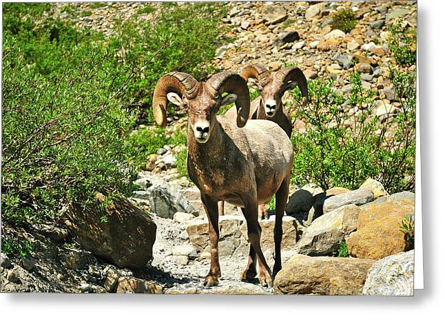 Glacier National Park Greeting Cards - Chance Encounters Greeting Card by Greg Norrell