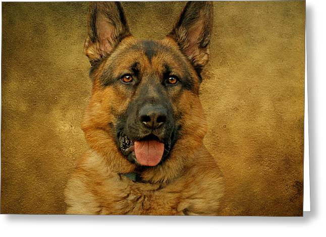 Indiana German Shepherds Greeting Cards - Chance - German Shepherd Greeting Card by Sandy Keeton