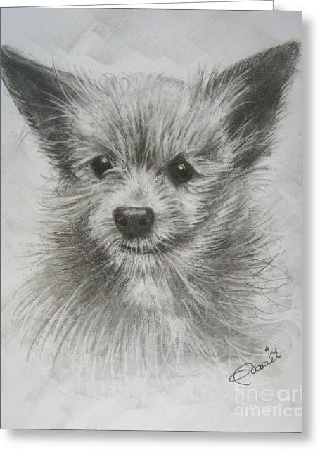 Puppies Drawings Greeting Cards - Yorkie Greeting Card by Patrice Torrillo